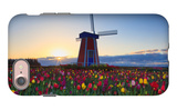 Tulip Field and Windmill iPhone 7 Case by  Lantern Press