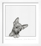 Sweet Chihuahua Prints by Jon Bertelli