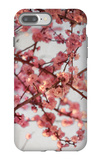 Cherry Blossoms I iPhone 7 Plus Case by Susan Bryant