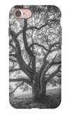 Wild Oak Tree in Black and White Portait, Petaluma, California iPhone 7 Case by Vincent James