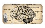 Vintage Brain Map Anatomy iPhone 7 Plus Case by  NaxArt
