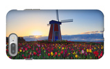 Tulip Field and Windmill iPhone 7 Plus Case by  Lantern Press