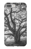 Wild Oak Tree in Black and White Portait, Petaluma, California iPhone 7 Plus Case by Vincent James