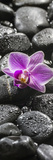 Orchid Blossom on Black Stones Photographic Print by Uwe Merkel