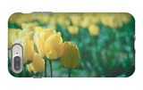 Yellow Tulip Field iPhone 7 Plus Case