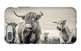 Highland Cattle iPhone 7 Plus Case by Mark Gemmell