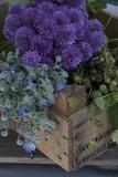 Herbal Box Photographic Print by Manuela Balck
