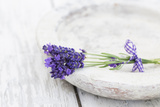 Lavender, Blossoms, Smell, Bunch, Bowl Photographic Print by Andrea Haase