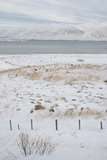 Landscape, Dalvik Area, Eyjafjšrdur, North Iceland Photographic Print by Julia Wellner