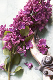 Lilac with Pruning Shears Photographic Print by Manuela Balck