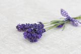 Lavender, Blossoms, Smell, Bunch Photographic Print by Andrea Haase