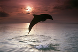 Sea, Silhouette, Ordinary Dolphin, Delphinus Delphis, Jump Photographic Print by Frank Lukasseck