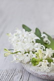 Hyacinths, White, Spring Flowers, Blossoms, Stone Bowl Photographic Print by Andrea Haase
