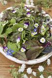 Salad Bowl Photographic Print by Manuela Balck