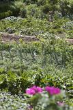 Cottage Gardens, Vegetables, Flowers Photographic Print by Manuela Balck