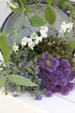 Garden Herbs Photographic Print by Manuela Balck