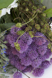 Herbs, Medium Close-Up Photographic Print by Manuela Balck