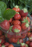Strawberries at the Glass Photographic Print by Manuela Balck