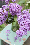 Lilac Decoration Photographic Print by Manuela Balck