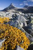 Scandinavia, Norway, Jotunheimen, National-Park, Rocks, Vegetation Photographic Print by Rainer Mirau