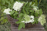 Basket with Elder Flowers Photographic Print by Manuela Balck