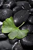 Ginko Leaf on Black Stones Photographic Print by Uwe Merkel