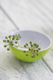 Still Life, Ivy Blossoms, Bowls, Green, White Photographic Print by Andrea Haase