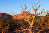 USA, Utah, Capitol Reef National Park, Parched Tree Photographic Print by Catharina Lux