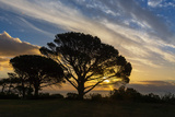 South Africa, Cape Town, Sundown Photographic Print by Catharina Lux