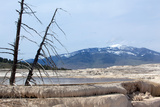 USA, Yellowstone National Park, Mammoth Hot Springs, Main Terrace Photographic Print by Catharina Lux