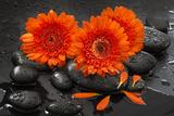 Red Blossoms on Black Stones Photographic Print by Uwe Merkel