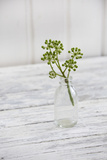 Still Life, Ivy Blossoms, Green, Glass Bottle, White Photographic Print by Andrea Haase