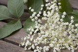 Elder Flowers, Medium Close-Up Photographic Print by Manuela Balck