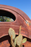 USA, Arizona, Route 66, Rusty Car Body, Cactus Photographic Print by Catharina Lux