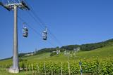 Germany, Hessen, Middle Rhine Valley, RŸdesheim, Niederwalddenkmal, Vineyards, Cable Car Photographic Print by Chris Seba