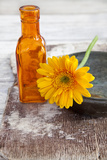 Gerbera, Flower, Orange, Glass Bottle Photographic Print by Andrea Haase