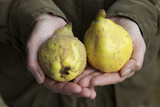 Hands Hold Quinces Photographic Print by Manuela Balck