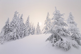 Winter Landscape, Trees, Snow-Covered Series, Nature, Vegetation Photographic Print by Roland T.