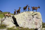 Austria, Styria, Schladminger Tauern, Rocks, Mountain-Goats, Nature Photographic Print by Rainer Mirau
