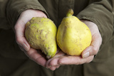 Hands Holding Quinces Photographic Print by Manuela Balck