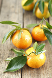 Clementines with Leaves on Wood Photographic Print by  Nikky