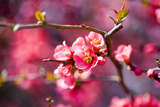 Spring-Bloom Photographic Print by Brigitte Protzel