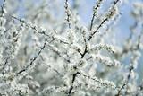 Spring-Bloom Photographic Print by Brigitte Protzel