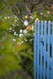 Blue Wooden Door in the Allotment Garden Photographic Print by Brigitte Protzel