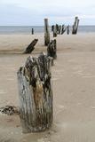 Latvia, Baltic Coast Near Cape Kolka, Slitere National Park Photographic Print by Catharina Lux