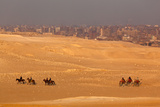 Egypt, Cairo, Giza, Evening Light, Camels and Horses Photographic Print by Catharina Lux