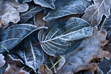 Fall Leaves, Hoarfrost Photographic Print by Brigitte Protzel