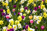 Flowerbed with Spring Flowers Photographic Print by Brigitte Protzel