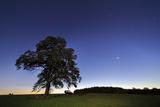 AllgŠu at Morning, Tree, Silhouette Photographic Print by Martin Zurek