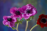 Four Poppies Photographic Print by Brigitte Protzel